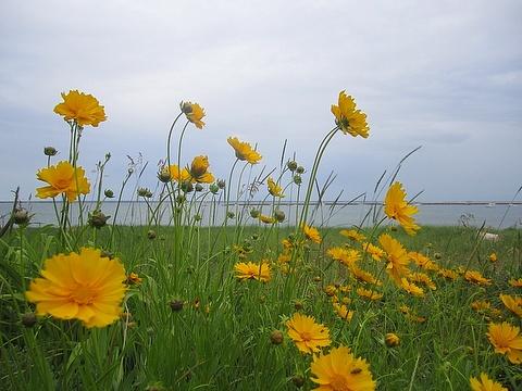 yellow_10june2013.jpg