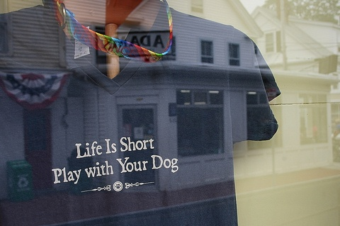 play_with_dog_28june2013.jpg